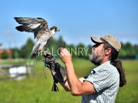 В Центре Соколиной охоты продажа амуниции для хищных птиц